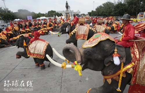 八十头大象在游行中列队表演,庆祝泰国国王普密蓬·阿杜德的八十